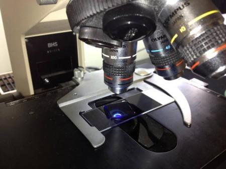 Symbolfoto eines Mikroskops